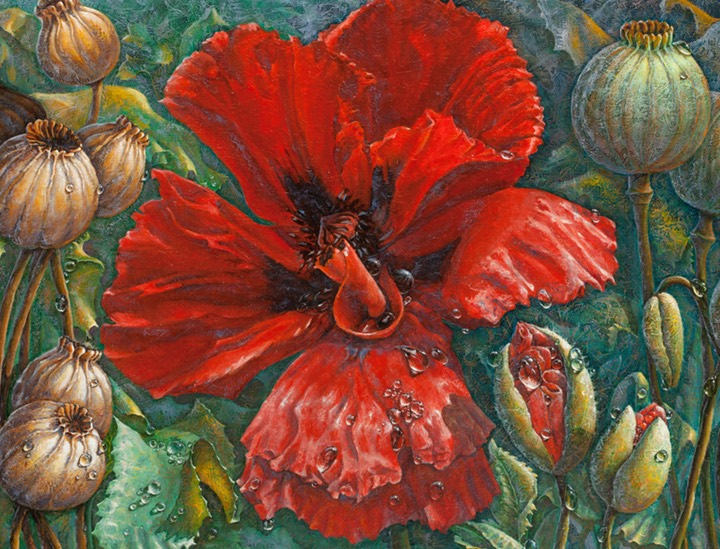 Poppies And The Dew  100 cm x 143 cm